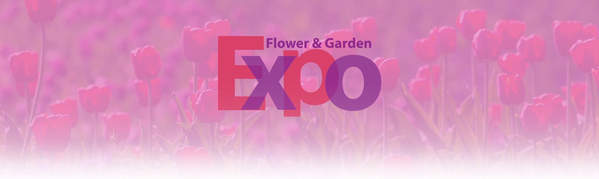 Expo Cover